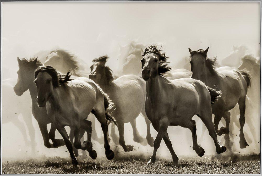 Horse - Heidi Bartsch Poster in Aluminium Frame