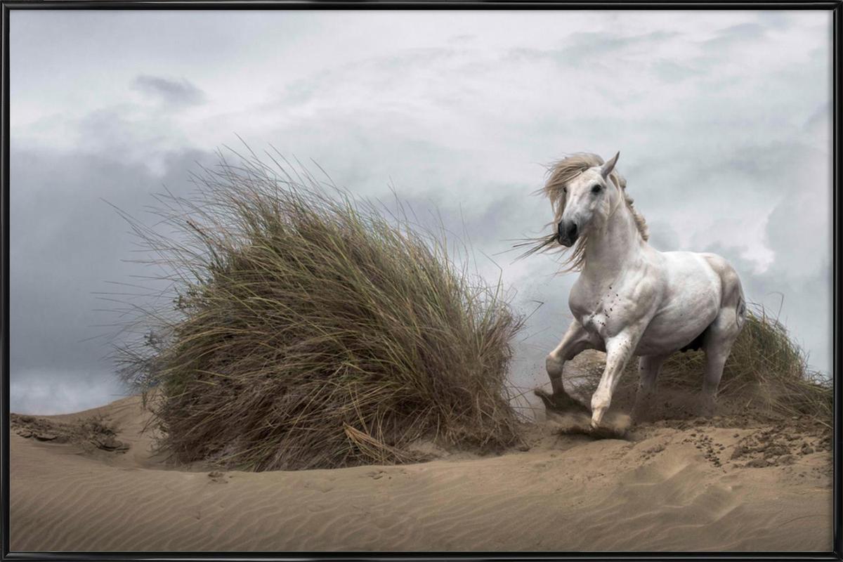White Stallion on the Beach - LucieBressy -Bild mit Kunststoffrahmen