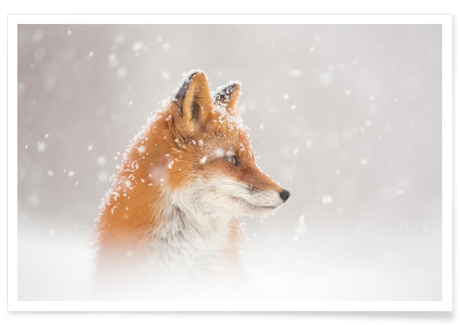 Snow is fallinga - Denis Budkov poster