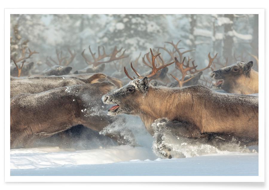 Reindeers III - Patrik Minar Poster