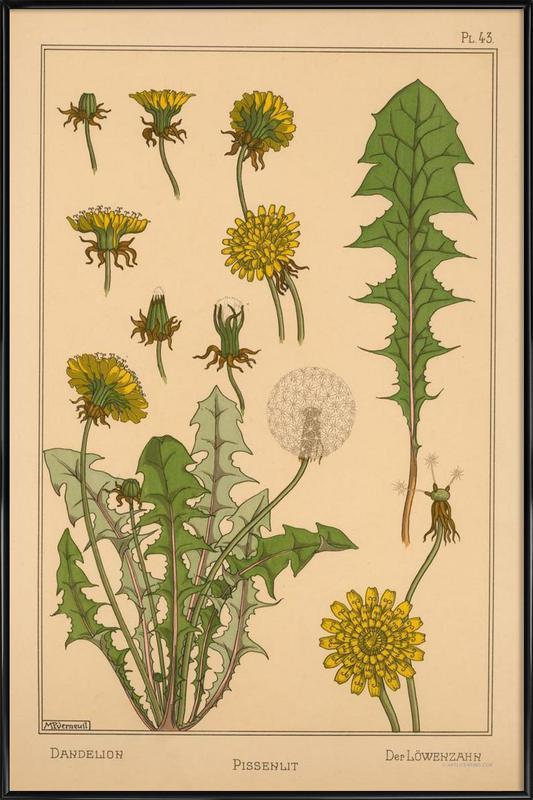 Eugene Grasset - Dandelion 43 -Bild mit Kunststoffrahmen