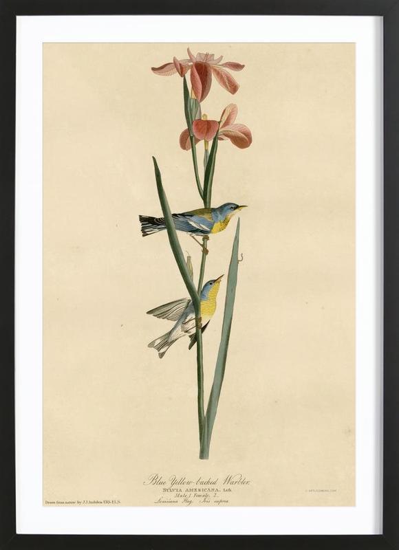 Blue Yellowbacked Warbler -Bild mit Holzrahmen
