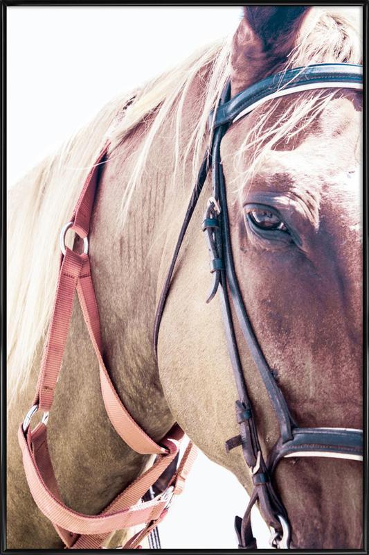 Horses II Framed Poster
