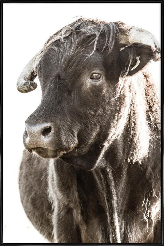 Bulls Head ll Framed Poster