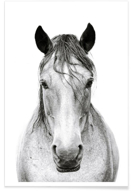Horse I -Poster