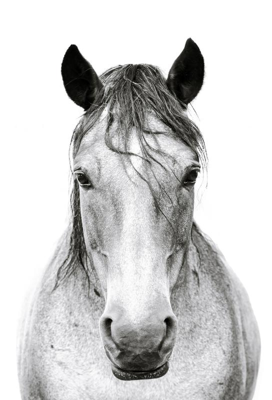 Horse I Acrylic Print