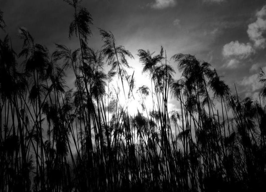 through the reeds leinwandbild