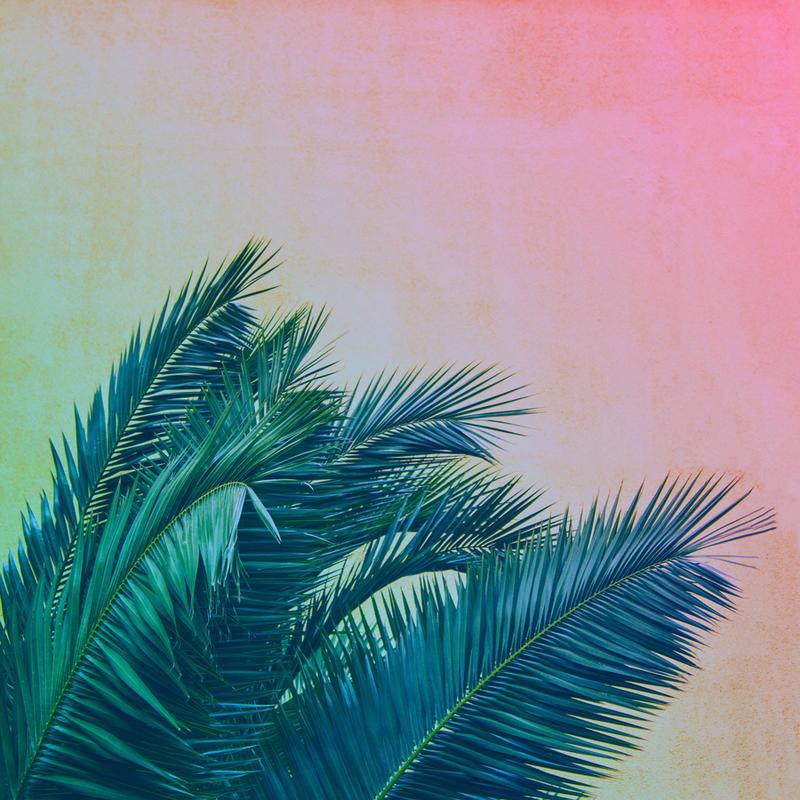 Palm III -Leinwandbild