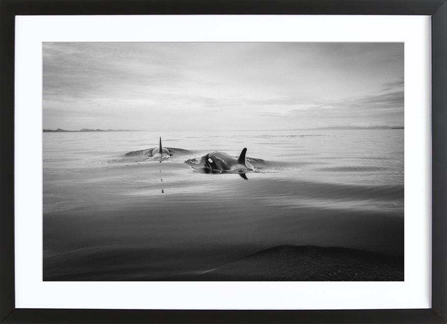 Canada 8 Framed Print