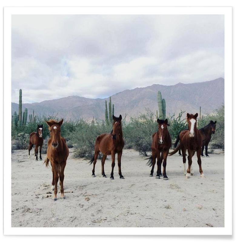 Bahía de los Ángeles Wild Horses affiche