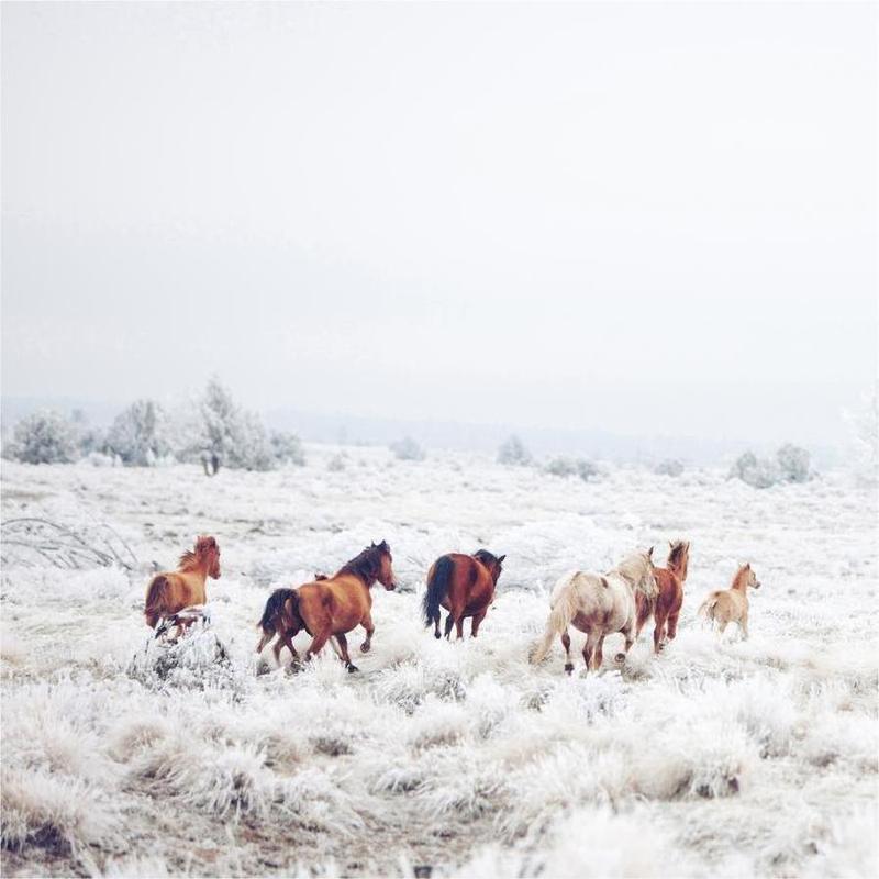 Winter Horses -Leinwandbild