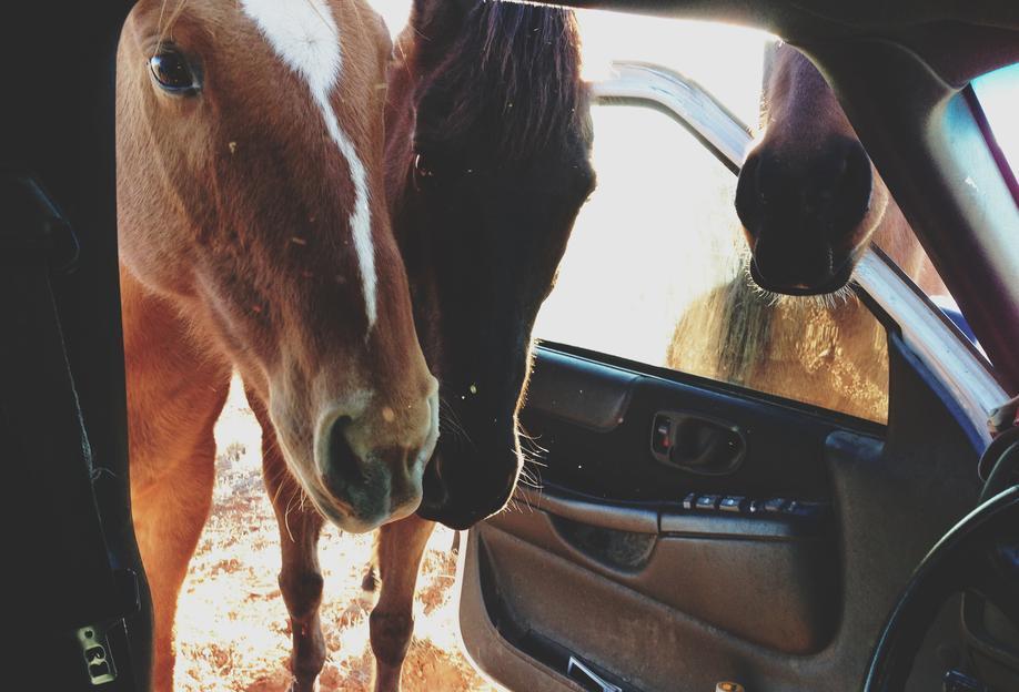 Car Horses Acrylic Print