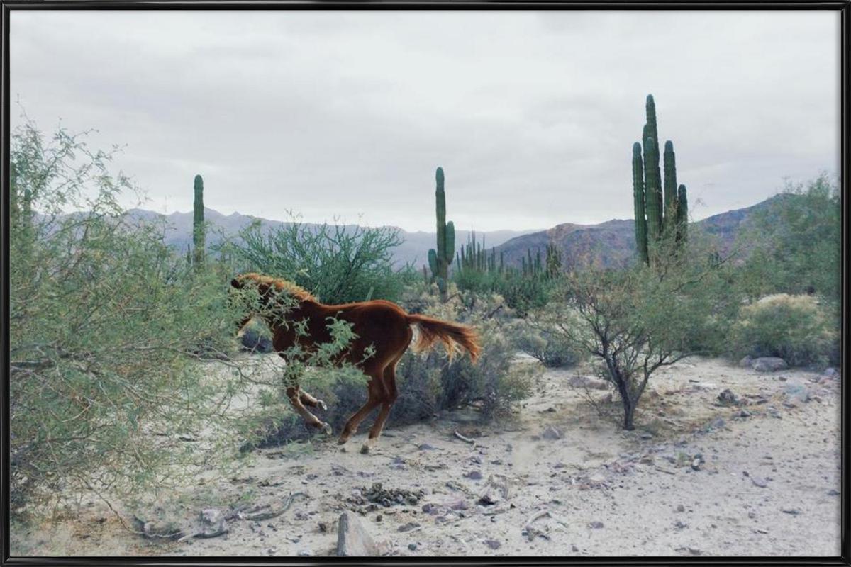 Mexican Horse Ride -Bild mit Kunststoffrahmen