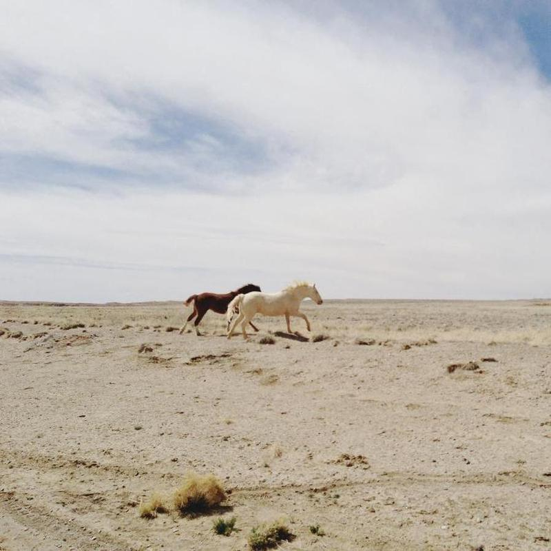 Bloomfield Horse Run -Leinwandbild