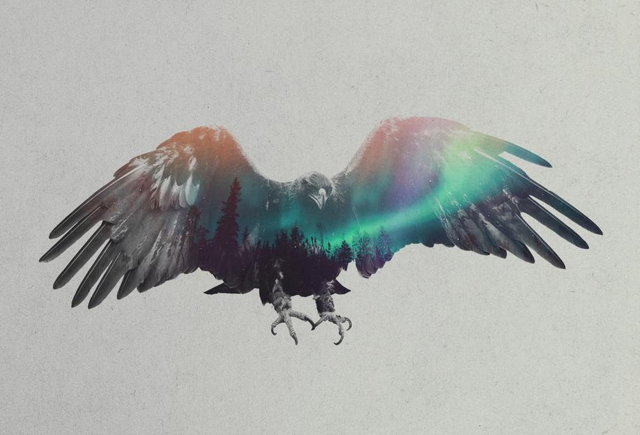 Eagle Acrylglasbild | Dekoration > Bilder und Rahmen > Bilder | Mehrfarbig | Aluminium