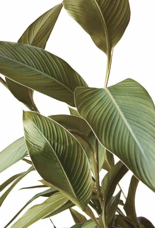 Leaves -Acrylglasbild