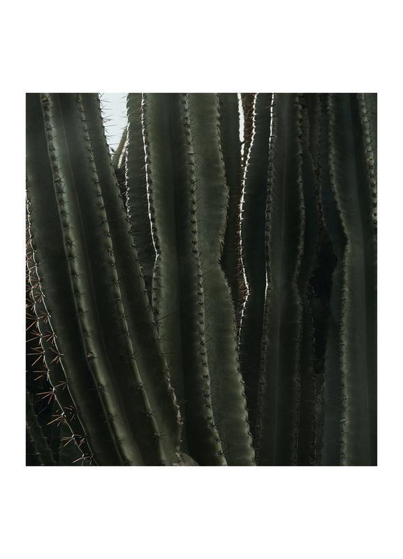Cactus 01 Canvas Print