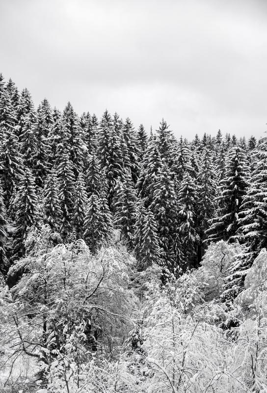 In The Forest Alu Dibond Druck
