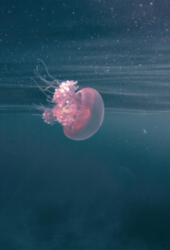 Dancing in the Water Acrylglasbild | Dekoration > Bilder und Rahmen > Bilder | Mehrfarbig | Aluminium