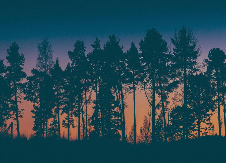 The Dawn -Leinwandbild