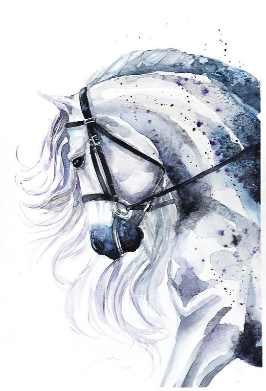 Horse portrait acrylglas print