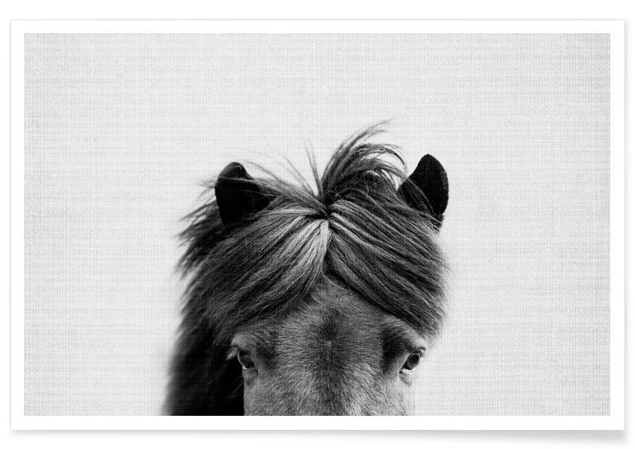 Paard zwart-wit foto poster