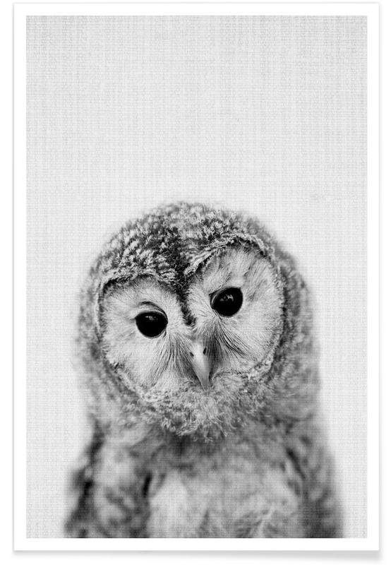 Owl Black & White Photograph Poster