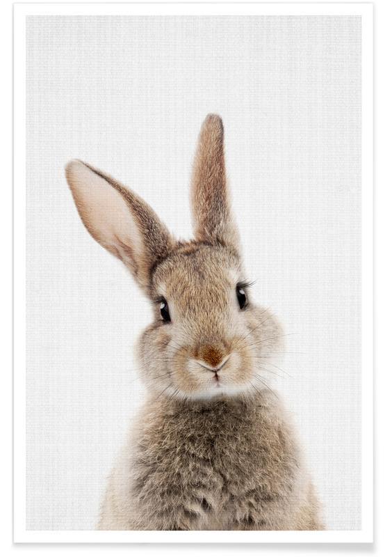 Baby Rabbit Colour Photograph poster