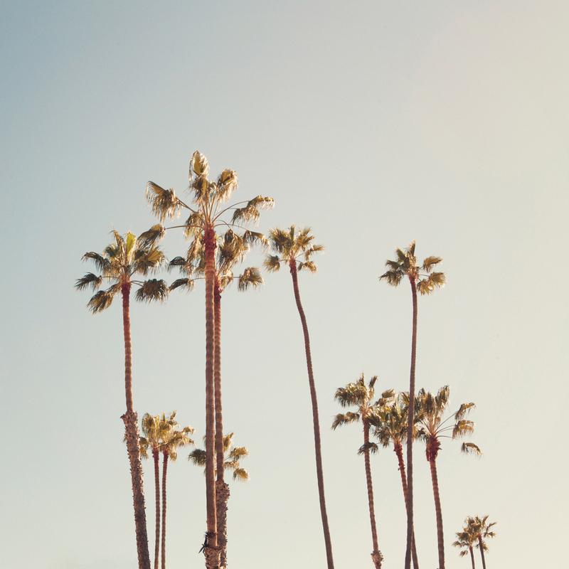 Palms -Leinwandbild