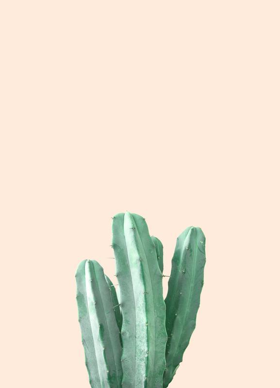 Pink Cactus -Leinwandbild