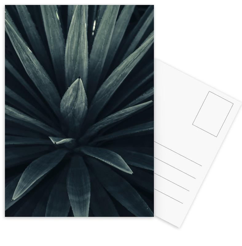 Palms 2397 Postkartenset