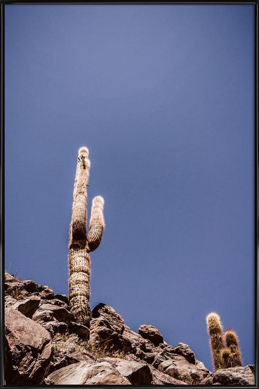 Atacama Cacti Family 2 -Bild mit Kunststoffrahmen
