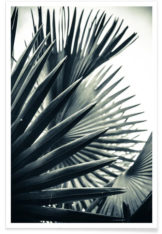 Palm Shade 2 poster