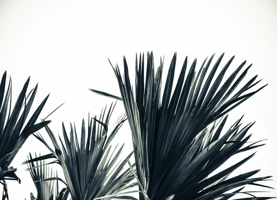 Palm Shade 3 Canvas Print
