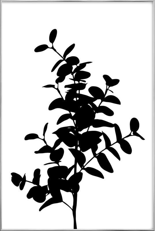 Eucalyptus Bunch Poster in Aluminium Frame