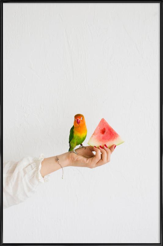 Watermelon And Parrot -Bild mit Kunststoffrahmen