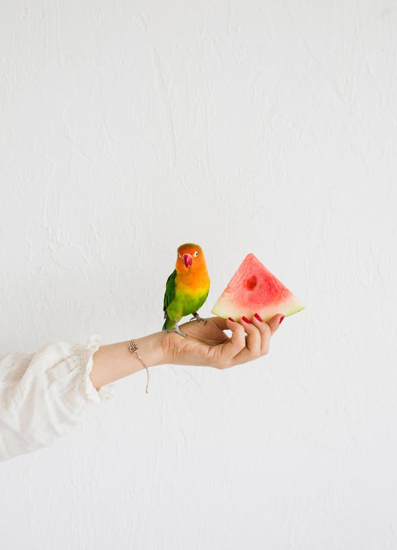 Watermelon And Parrot -Leinwandbild