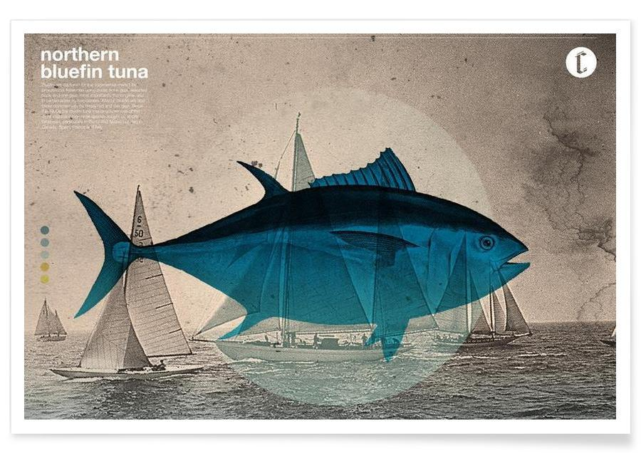 Northern Bluefin -Poster