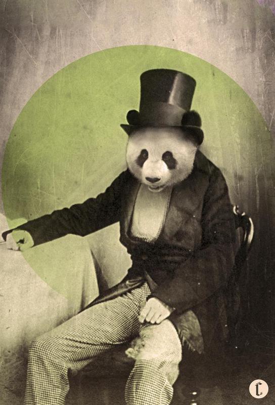 Proper Panda -Acrylglasbild