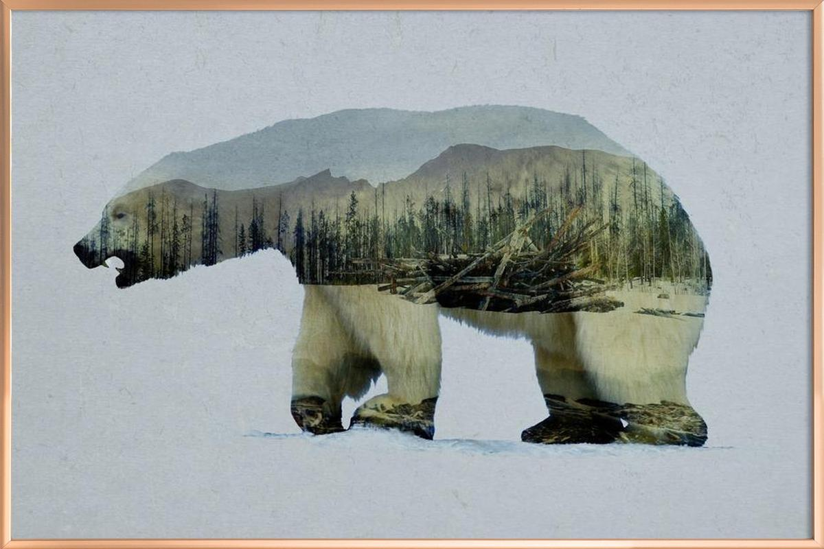 The Arctic Polar Bear -Poster im Alurahmen