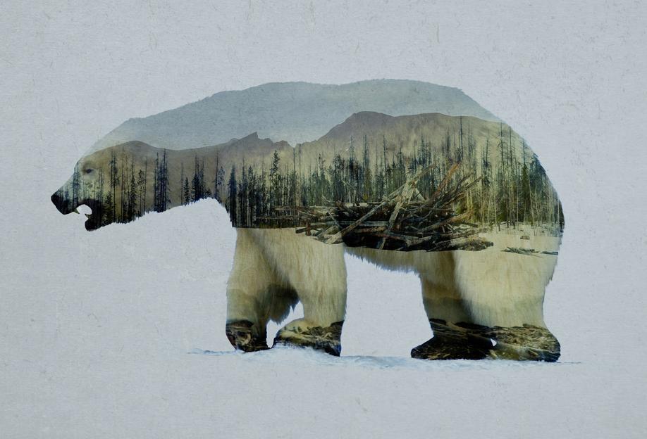 The Arctic Polar Bear -Alubild