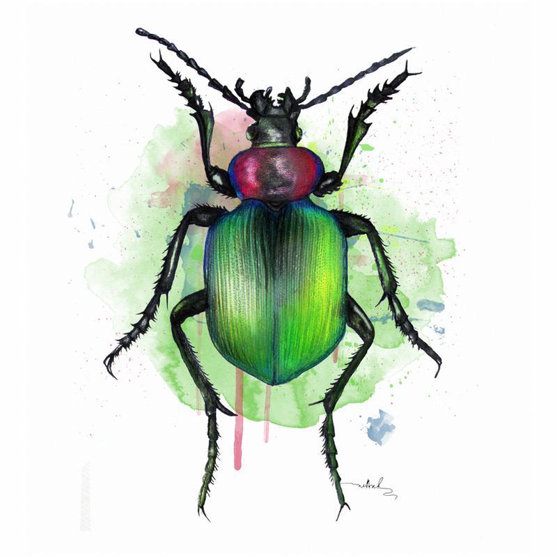 Calosoma Sycophanta Acrylglasbild | Dekoration > Bilder und Rahmen > Bilder | Mehrfarbig | Aluminium