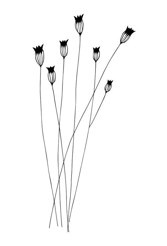 Kornblumen alu dibond