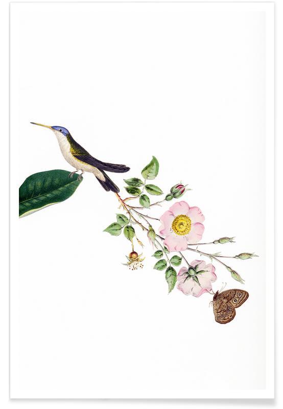 Bird of Paradise #22 poster