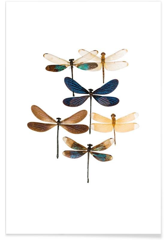 Insect 7 poster
