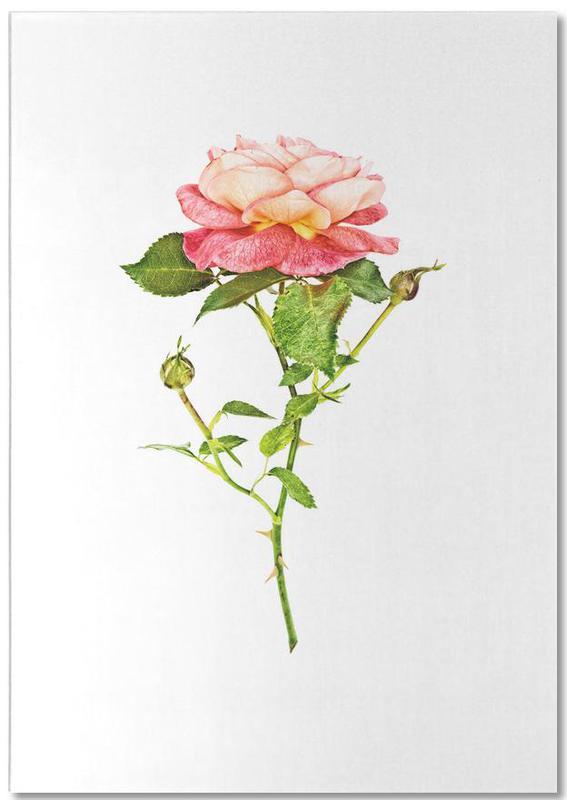 Rose 2 Notepad