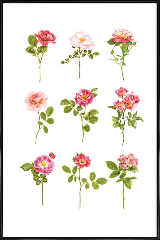 Roses 2 Framed Poster