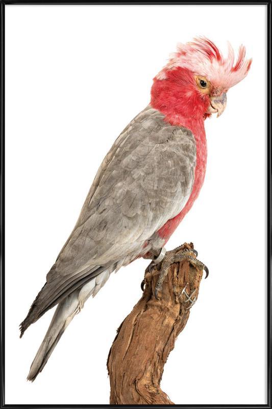Bird 1 -Bild mit Kunststoffrahmen