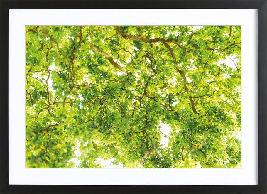 Hazel Tree Framed Print