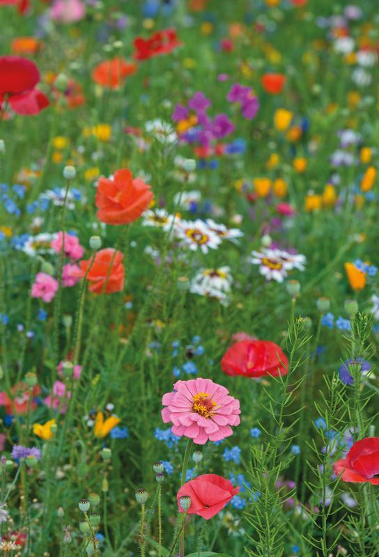 Wild Flowers Field 1 Impression sur alu-Dibond